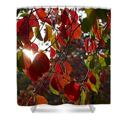 Autumn Dogwood In Evening Light Shower Curtain