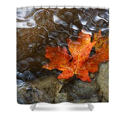 Autumn Down Under Shower Curtain