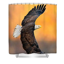 Autumn Eagle Shower Curtain