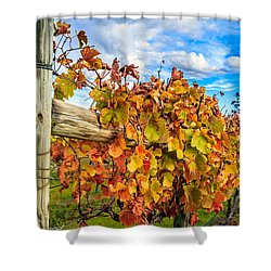 Autumn Falls At The Winery Shower Curtain