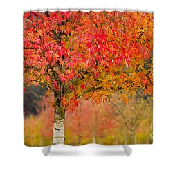Autumn Fire Shower Curtain by Sonya Lang