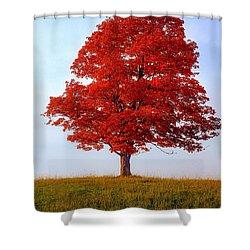 Autumn Flame Shower Curtain by Steve Harrington