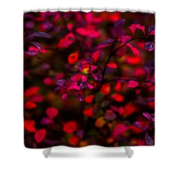 Autumn Flames 2 - Square Shower Curtain by Alexander Senin