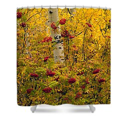 Autumn Forest Colors Shower Curtain by Leland D Howard