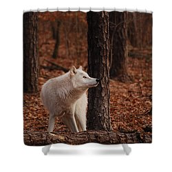 Autumn Gaze Shower Curtain
