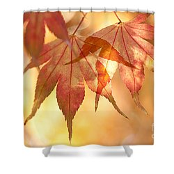 Autumn Glow Shower Curtain by Anne Gilbert