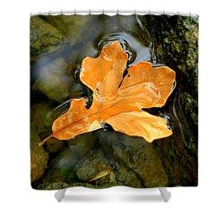 Shower Curtain featuring the photograph Autumn Gold by Viviana  Nadowski