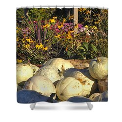 Autumn Gourds Shower Curtain by Joann Vitali
