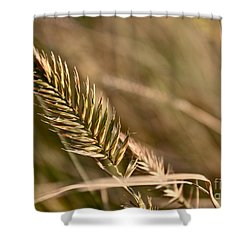 Autumn Grasses Shower Curtain