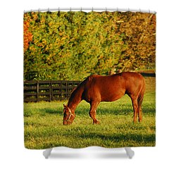 Autumn Grazing Shower Curtain by James Kirkikis