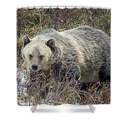 Shower Curtain featuring the photograph Autumn Grizzly by Jack Bell
