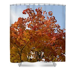 Autumn Harmony 1 Shower Curtain