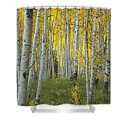 Autumn In The Aspen Grove Shower Curtain by Juli Scalzi