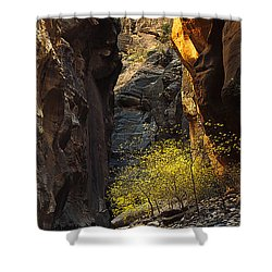 Shower Curtain featuring the photograph Autumn In The Narrows by Andrew Soundarajan
