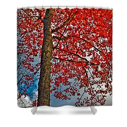 Autumn In The Trees Shower Curtain by David Patterson