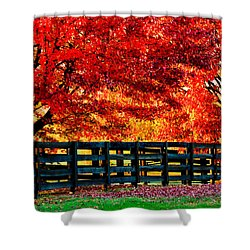 Autumn Kentucky Maples Shower Curtain