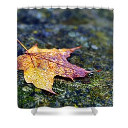 Autumn Leaf On Rocky Ledge Shower Curtain