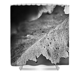 Autumn Leaves B And W Shower Curtain