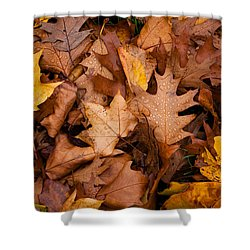 Shower Curtain featuring the photograph Autumn Leaves by Matt Malloy