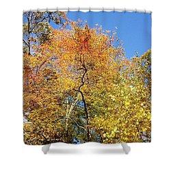 Shower Curtain featuring the photograph Autumn Limbs by Jason Williamson