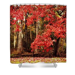 Shower Curtain featuring the photograph Autumn Maple 2 by Kelly Nowak