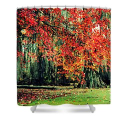 Shower Curtain featuring the photograph Autumn Maple  by Kelly Nowak
