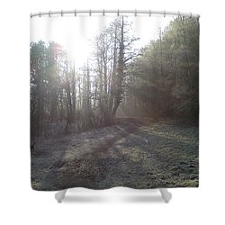 Autumn Morning 3 Shower Curtain by David Stribbling