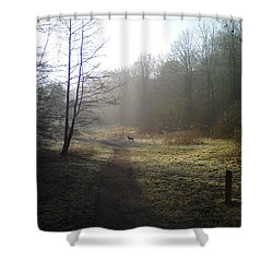 Autumn Morning 4 Shower Curtain by David Stribbling