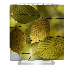 Autumn Mosaic Shower Curtain by Penny Meyers