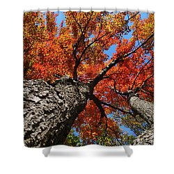 Autumn Nature Maple Trees Shower Curtain by Christina Rollo