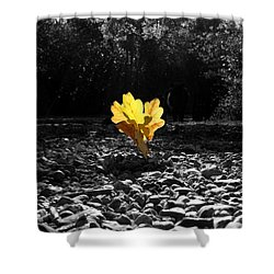Autumn Oak Isolations Shower Curtain by Terri Waters