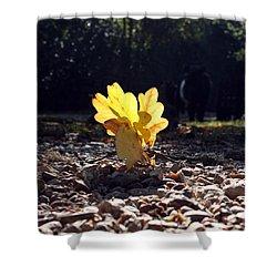 Autumn Oak Shower Curtain by Terri Waters