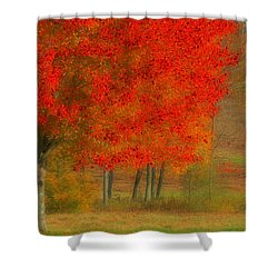 Autumn Popping Shower Curtain by Karol Livote