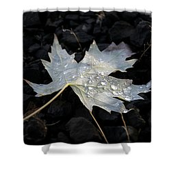 Shower Curtain featuring the photograph Autumn Rain by Katie Wing Vigil