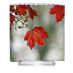 Autumn Red Shower Curtain by Karol Livote