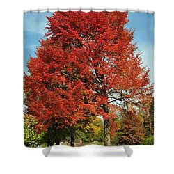 Autumn Red Shower Curtain by Frozen in Time Fine Art Photography