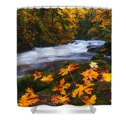 Autumn Returns Shower Curtain by Darren  White