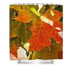Autumn Sunlight Shower Curtain