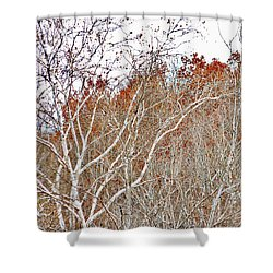 Autumn Sycamores Shower Curtain by Bruce Patrick Smith
