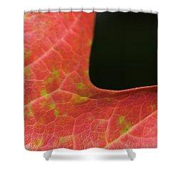 Autumn  Shower Curtain by Tara Lynn