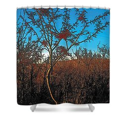 Autumn Shower Curtain by Terry Reynoldson