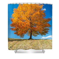 Autumn Tree - 1 Shower Curtain