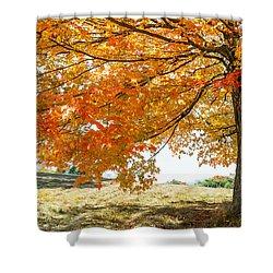 Autumn Tree - 2 Shower Curtain