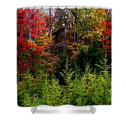 Autumn Tree Foliage Shower Curtain by Lanjee Chee