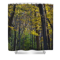 Shower Curtain featuring the photograph Autumn Trees Alley by Sebastian Musial