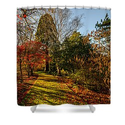 Autumnal Forest Shower Curtain by Adrian Evans