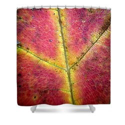 Autumnal Intricacy Shower Curtain by Natasha Marco