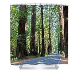 Avenue Of The Giants Shower Curtain by Heidi Smith