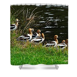 Avocets Shower Curtain