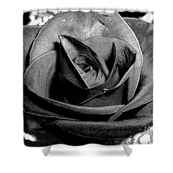 Awakened Black Rose Shower Curtain